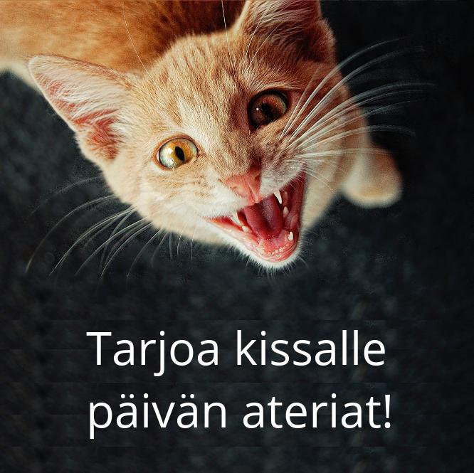 Hesy Koirat