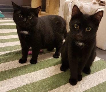 Samara (vasemmalla) etsii uutta kotia yhdessä Michaelin kanssa.
